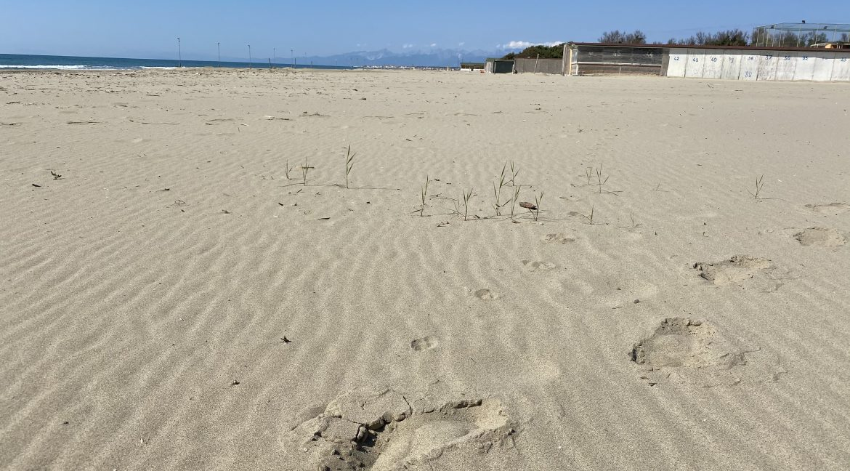 Sabbia Tirrenia