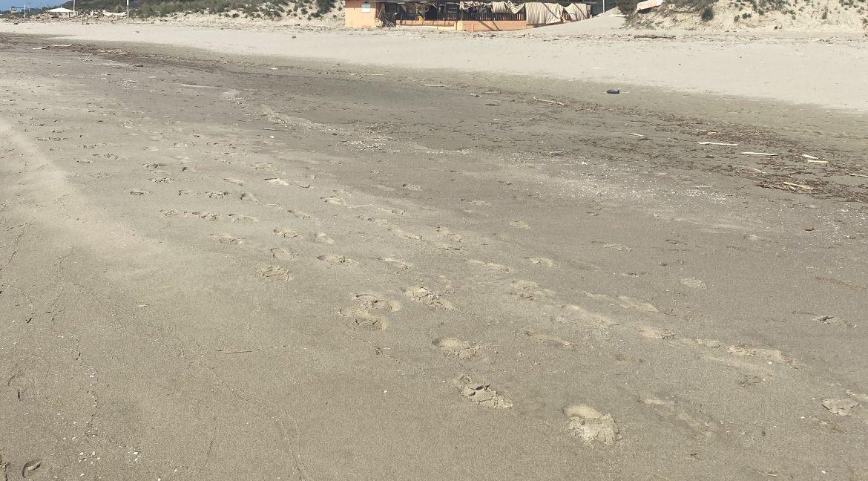 Toscana Tirrenia spiagga con Dune.